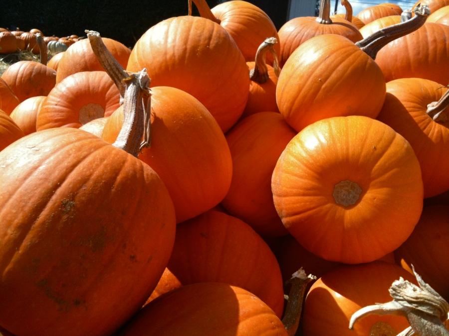 San Marcos pumpkin patch