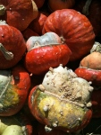 San Marcos pumpkin patch gourds