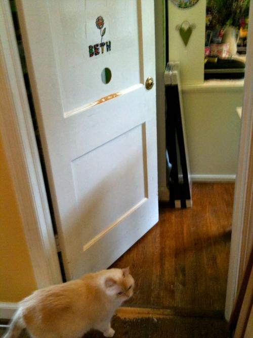 Coco inspecting open door.