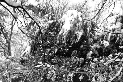SnOMG Trees