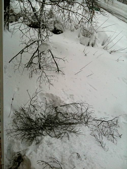 Waist-deep snow: snow bridge of limbs to stand on.