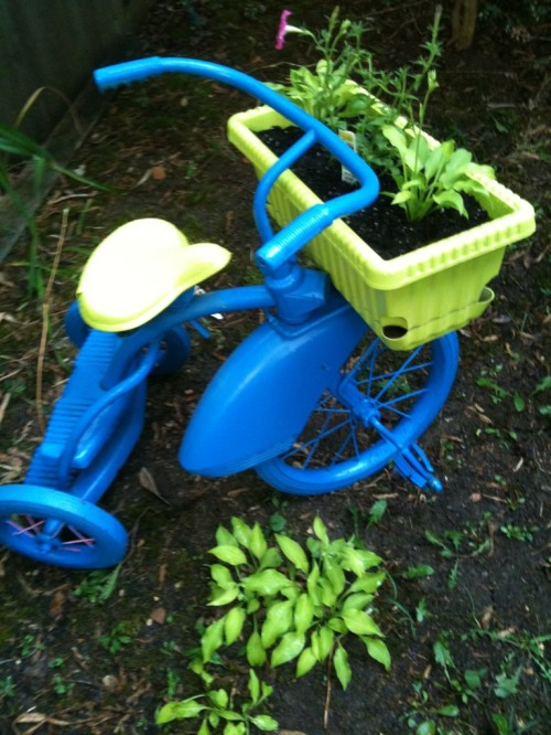 Tricycle Planter in my yard