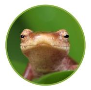 Frog image from Amphibian Ark website