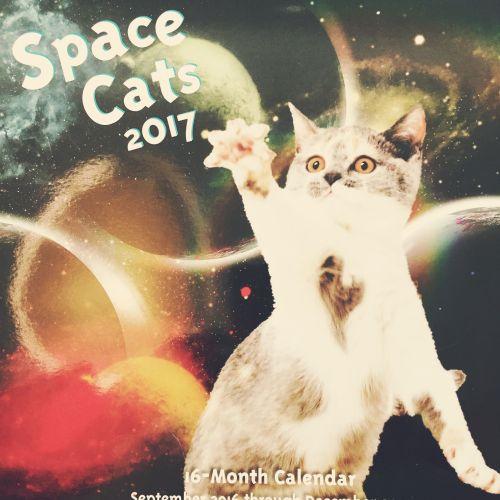 2017catsinspace